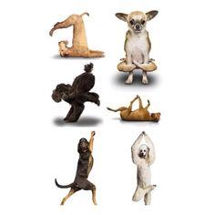 Yoga dogs...