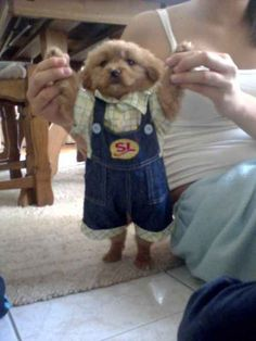 This gentleman is all dressed up in his nice overalls. Aww.