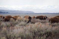 Wildlife photos from Grand Teton Natl Park