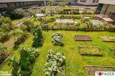 Pas besoin de jardin : des potagers sur les toits de nos immeubles - Le Parisien