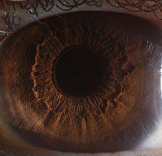 a-iris-um-mundo-nos-seus-olhos