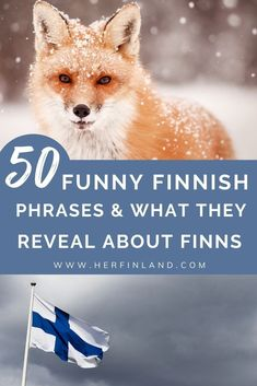 Finland Facts, Finland Culture, Finnish Language, Book Of Matthew, Phrase Meaning, Finland Travel, Language Quotes, Funny Phrases, The Donkey