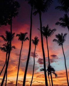 Palm tree sunset in Tamarindo Costa Rica. palm tree silhouette, sunset palm trees sunset, sunsets, beach sunset, sunset ocean, sunset photography, sunset pictures, sunset sky, sunset beautiful, sunset Costa Rica, sunset beach Summer, sunset beach photography, sunset beach wanderlust, palm tree sunset, palm tree photography, palm tree background, palm tree Hawaii, palm tree paradise, palm tree summer, palm tree pictures #sunset#beachlife#costarica#coastaliving #palmtree