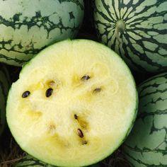 Melon 'Petite Yellow' Watermelon