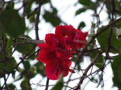 Giih Flore: fotografia