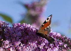 Pour jardiner avec la lune en avril 2012, suivez le calendrier lunaire de Rustica.
