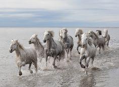 running free ..                                                 (Marco Carmassi)