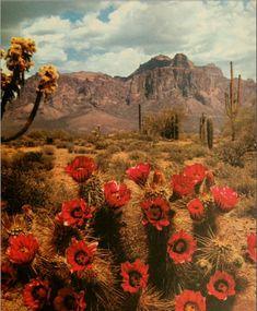 desert life The desert is calling. Desert Dream, Desert Life, Beautiful World, Beautiful Places, Desert Aesthetic, Aesthetic Art, Le Far West, Adventure Is Out There, Route 66
