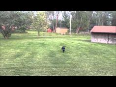 JB doing some frisbee action. - YouTube