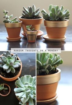 succulents in painted pots for kitchen