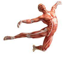 8 увлекательных фактов о фасции – недооцененной ткани нашего тела