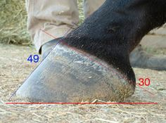 The Horse's Hoof: Hoof Angles