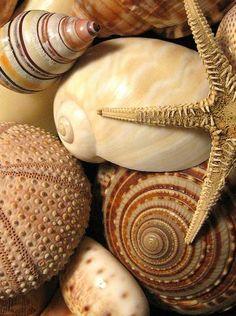beach - seaside - costal living - sea shells