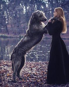 Irish Wolf Hound sooo cute I love HUGE dogs!it's complicated Big Dogs Amor Animal, Mundo Animal, Beautiful Dogs, Animals Beautiful, Terriers, Big Dogs, Dogs And Puppies, Irish Wolfhound Dogs, Animals And Pets