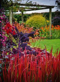 Edible Landscaping: Kitchen Garden | jardin potager | bauerngarten | köksträdgård (ornamental kale is edible)