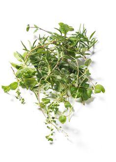 Mieszanka ziołowa do produkcji kompleksu Saveur, Parsley, Spices, Herbs, Wine, Fresh, Wallpaper, Plants, Food