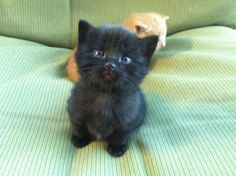 OMG this is the cutest kitten EVER