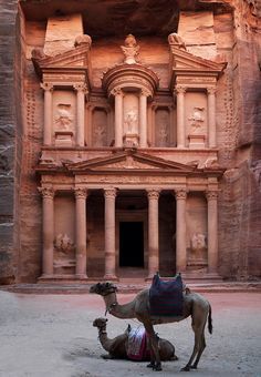 Camels In Front Of Al Khazneh Treasury Ruins, Petra, Jordan Petra, Jordan. One of the most incredible places I've ever visited. Places To Travel, Places To See, Travel Destinations, Places Around The World, Around The Worlds, Beautiful World, Beautiful Places, Camelus, City Of Petra