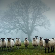 """This looks like the opening for a spooky (not gory) movie, maybe """"The Silent Sheep of Colbus Crag""""?"""