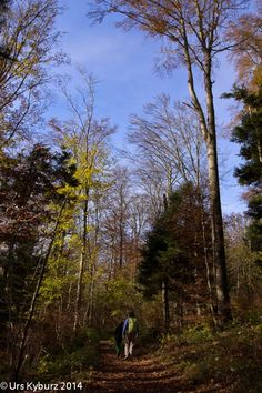 In der Natur unterwegs: Herbstwandern über dem Nebel - wandern im Herbstwald - #Jura #wandern #Schweiz