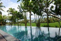 Bali Harmony Villas - dip into our amazing infinity pool right on the rice fields!  http://baliharmonyvilla.com/