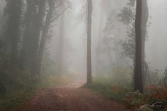 Foggy Forest, Forest Path, Forest Fairy, Iphone Wallpaper Orange, Dark Landscape, Southern Gothic, Nature Aesthetic, Pretty Cool, Forests