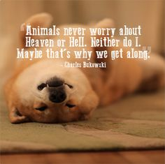 """""""Animals never worry about heaven or hell.  Neither do I.  Maybe that's why we get along."""" - Charls Bukowski"""
