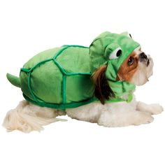 What dog hasn't secretly wanted to be a turtle some point in its life?!