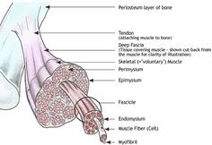 Myofascial pain is typically a chronic disorder associated with tender and sensitive spots or zones in the muscle that develop, called trigger points.