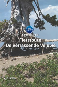 🚲Fietsroute De verrassende Veluwe #Fietsen #Veluwe #Reizen #Buiten #Gezond
