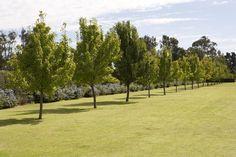 Paul Bangay Garden Design Home - Paul Bangay Garden Design