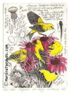 Fine Art Etchings by Marina Terauds: Goldfinches