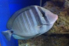 27 Blue Reef Aquarium, Fish, Pets, Animals, Animales, Animaux, Pisces, Animal, Animais