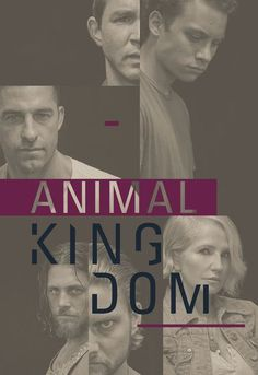 Animal Kingdom Season 4 Streaming : animal, kingdom, season, streaming, ANIMAL, KINGDOM, Ideas, Animal, Kingdom,, Kingdom