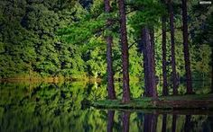 Image result for forests