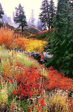 ✯ Heather Meadow - Mt. Baker, Washington