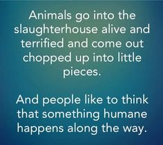 Be vegan and take a moral stand against abuse, exploitation, and violent injustice towards animals. No excuses. Start today.