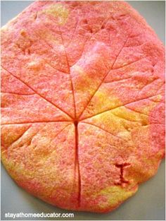 Leaf Prints in Salt Dough