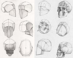 череп построение рисунок - Поиск в Google
