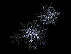 "Photo ""Snowflakes"" by renowilliams"