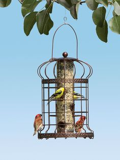Edwardian Bird Feeder - Squirrel Resistant Bird Feeder