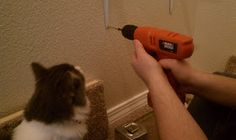 Installing Tips for DIY Cat Shelves