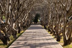 Realistic Graphic DOWNLOAD (.ai, .psd) :: http://realistic-graphics.xyz/pinterest-itmid-1006727138i.html ... Tree Tunnel in The Park ... entrance, garden, nature, park, pathway, sunlight, tree, tunnel, walk, winter ... Realistic Photo Graphic Print Obejct Business Web Elements Illustration Design Templates ... DOWNLOAD :: http://realistic-graphics.xyz/pinterest-itmid-1006727138i.html