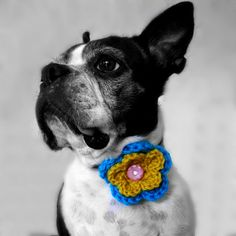2 Color Crochet Dog Collar Flower MORE by sofacitysweethearts, $11.99