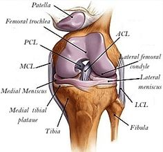 Useful facts on knee replacement: Dr. Munjed Al Muderis, Orthopaedic Surgeon