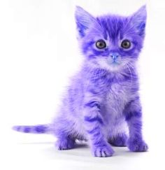 Twinkie Cake's plum-colored kitten is named Puss Pudding