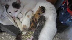 Kitty e i suoi gattini appena nati