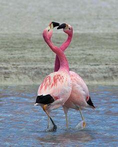 Lisa Ann θεά του μεγάλο πουλί μεγάλα δικλαδίκια
