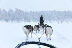 Last December, we experienced an amazing winter. Finnish Lapland is mostly known for the Santa's official home, the Santa Claus Village, but we can guarantee you that it is definitely more than that!  During our tour, a lovely local lady, who is also the daughter of a local reindeer breeder, gave us many insights about the local life in Lapland. It is very impressive to see how life is very different in the North. When you visit this region, it means you are covered with endless glazed…