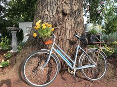 Ballarat Begonia fest